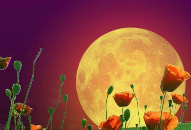 Влияние фаз Луны на растения (растущая, убывающая, новолуние, полнолуние)