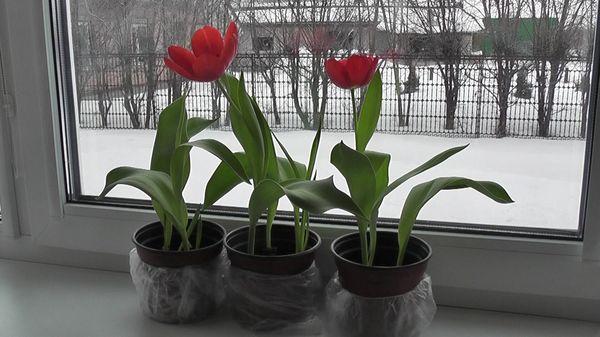 Тюльпаны отцвели, что дальше?
