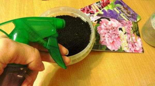Посев семян петунии