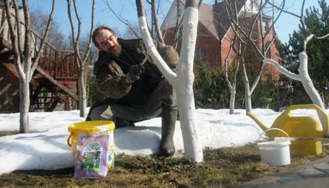 Что нужно делать садоводу в марте
