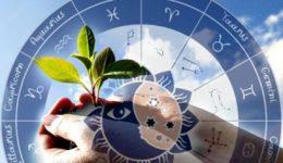 Лунный посевной календарь на март 2018 года для садоводов и огородников
