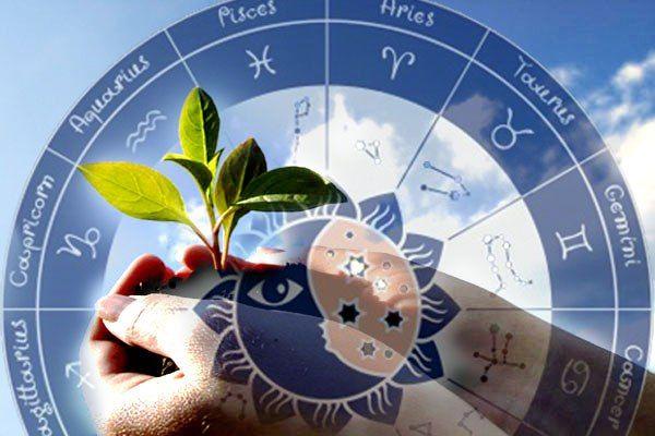 Влияние знаков Зодиака на растения