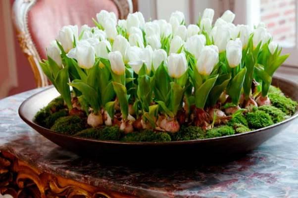 Когда посадить тюльпаны к 8 марта