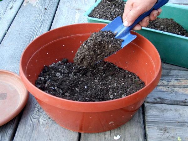 Подготовка почвы и емкостей для посадки