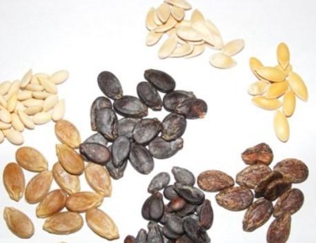 семена дынь и арбузов