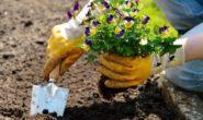 Лунный посевной календарь на апрель 2018 года для садоводов и огородников