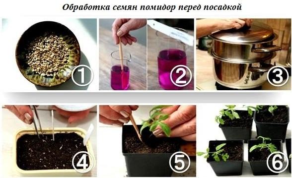 Пошаговая инструкция: этапы подготовки семян томатов