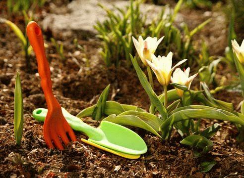 Благоприятные и неблагоприятные посадочные дни в апреле для посадок семян овощей и цветов