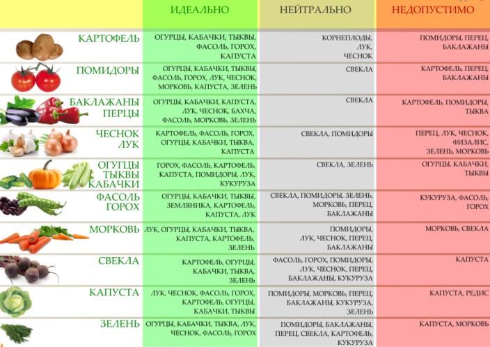 Таблица севооборота овощных культур на огороде
