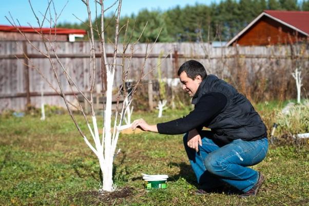 Что нужно делать садоводу в апреле