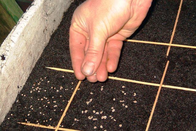 Посев семян в домашних условиях