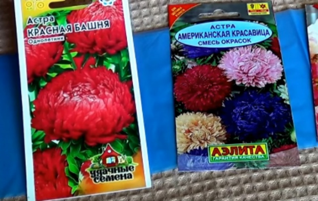 Выбор семян и сорта