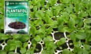 Чем подкормить рассаду петунии для роста для роста, чтобы были толстенькими
