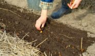 Лунный посевной календарь на май 2018 для садоводов, огородников, цветоводов