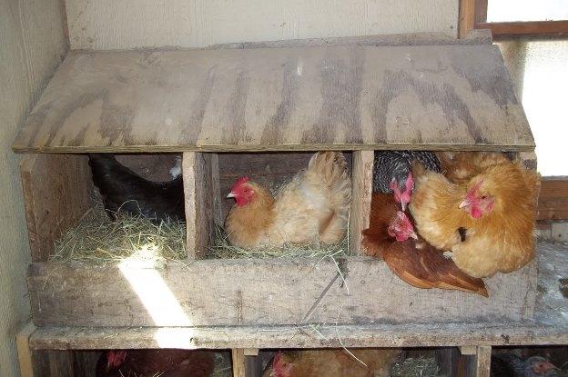 Чем важны гнездовые домики