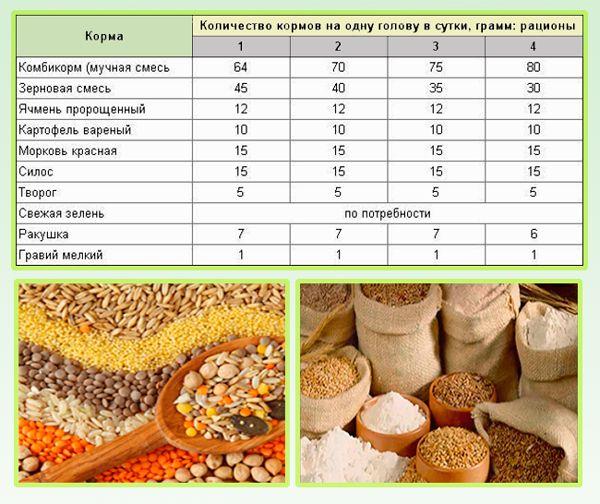 Виды кормов со способами приготовления