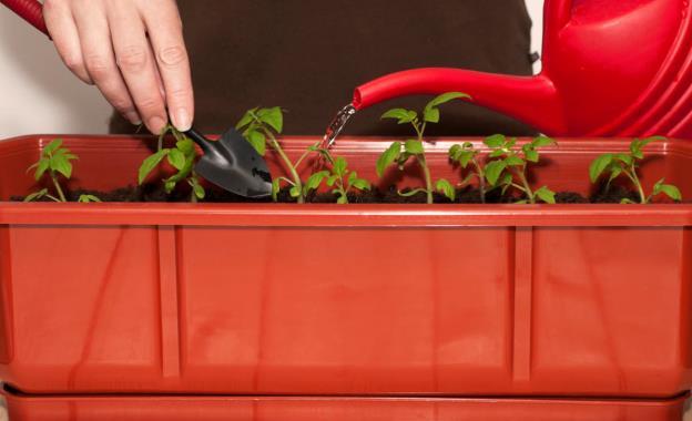 Основные ошибки огородников при поливе