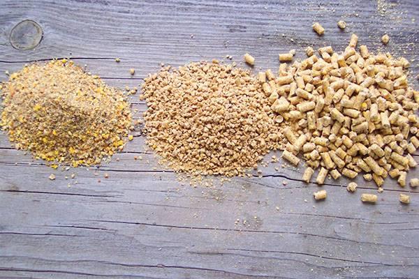 Комбикорм для кур-несушек своими руками – рецепты