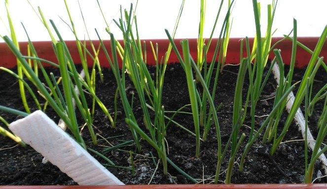 Сроки посева, когда сажать на рассаду