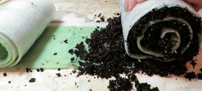 Как правильно посадить семена в улитку?