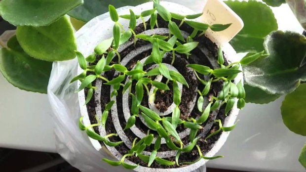 Какие растения можно выращивать в улитках