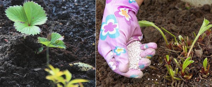 Для молодых растений