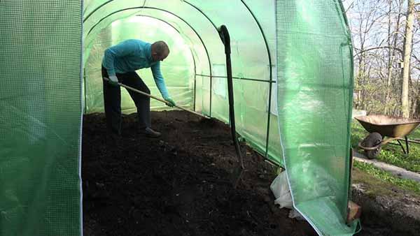 Чем и как обработать землю от болезней и вредителей