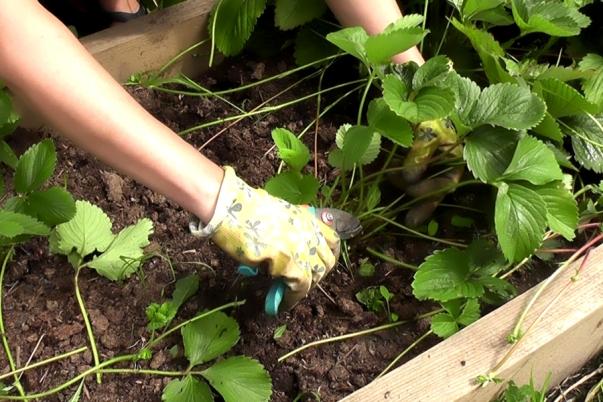 Чем обработать: народные средства и химия в помощь садоводу