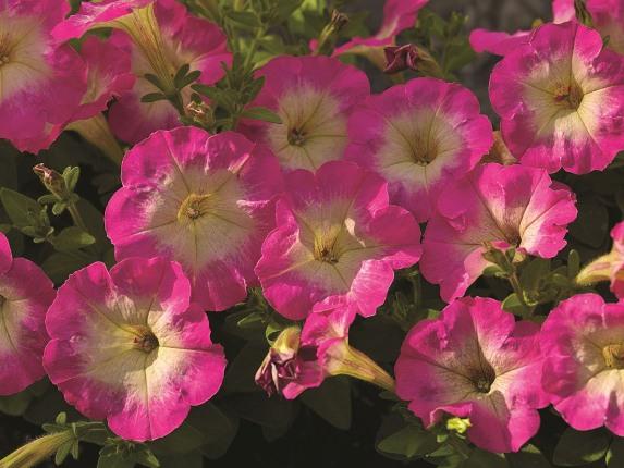 Мелкоцветковые