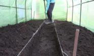 Обработка почвы в теплице весной от вредителей и болезней