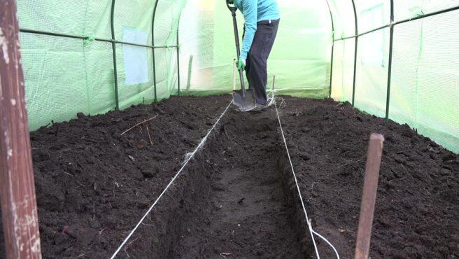 Как обработать почву перед посадкой помидор