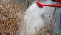 Обработка смородины весной от болезней и вредителей народными средствами, кипятком
