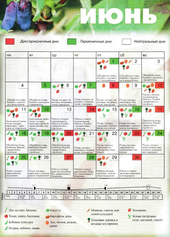 Лунный посевной календарь на июнь 2018 года для садоводов, огородников, цветоводов (таблица)