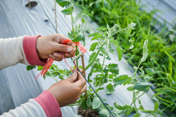 Полезные советы садоводу