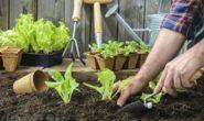 Лунный посевной календарь на июнь 2018 года для садоводов, огородников, цветоводов (таблица) Благоприятные дни