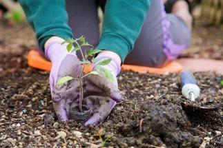Благоприятные дни для посева, посадки культур