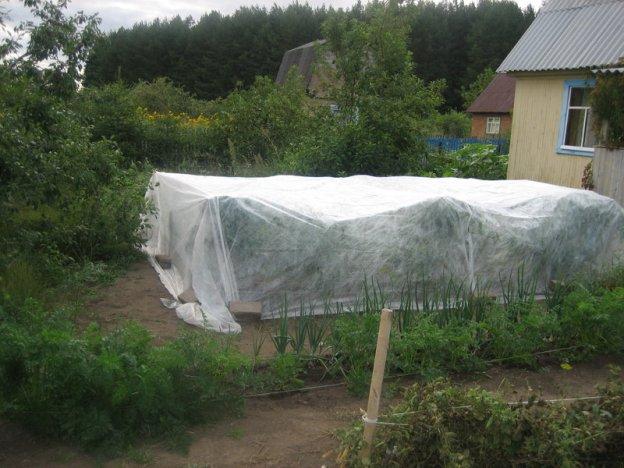 Как сажать помидоры под временные укрытия