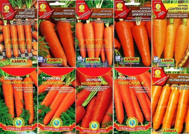 Выбор сорта для подзимнего посева