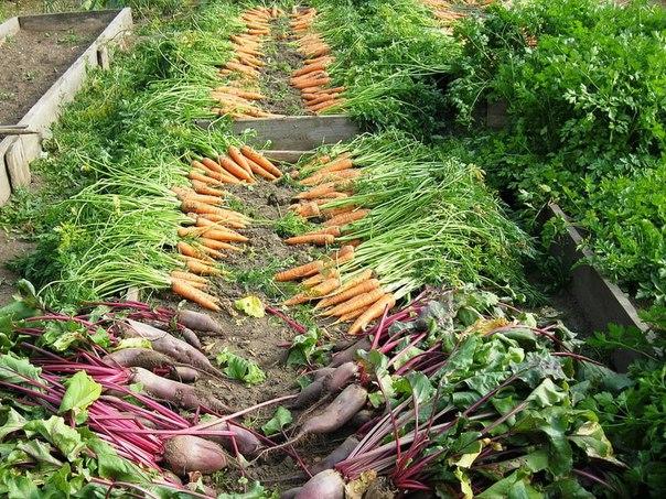 Что делать садоводу в сентябре