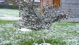 Как укрыть молодую яблоню на зиму. Когда укрывать. Частые ошибки