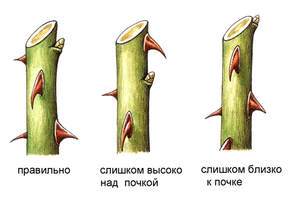 Обрезка