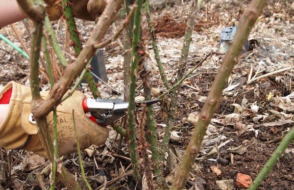 Частые ошибки садоводов