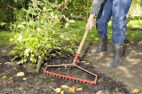 Работа в саду в ноябре