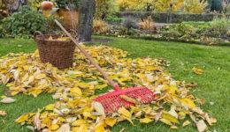 Лунный календарь на ноябрь 2018 для садоводов