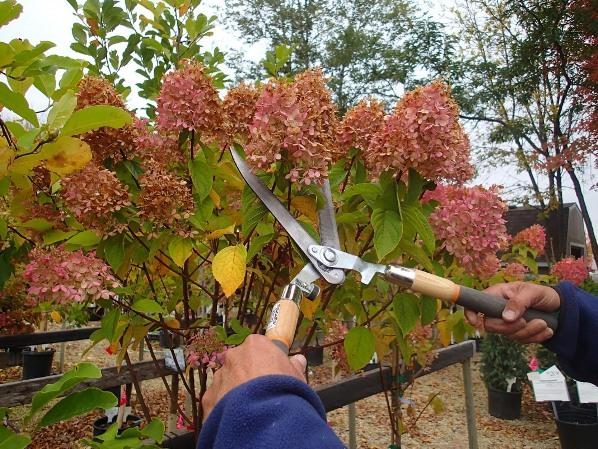 Нужно ли обрезать растение осенью