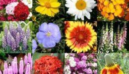 Какие цветы можно посадить под зиму семенами в открытый грунт