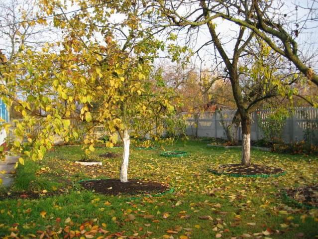 Что делать садоводам в октябре