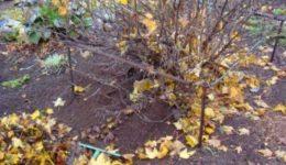 Лунный посевной календарь садовода и огородника на октябрь 2018