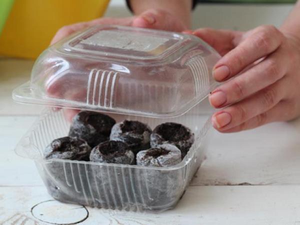 Посев семян в торфяные таблетки