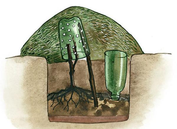 Как правильно укрыть молодой виноград пошагово